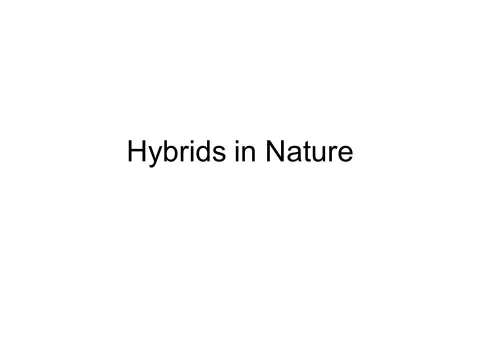 Hybrids in Nature