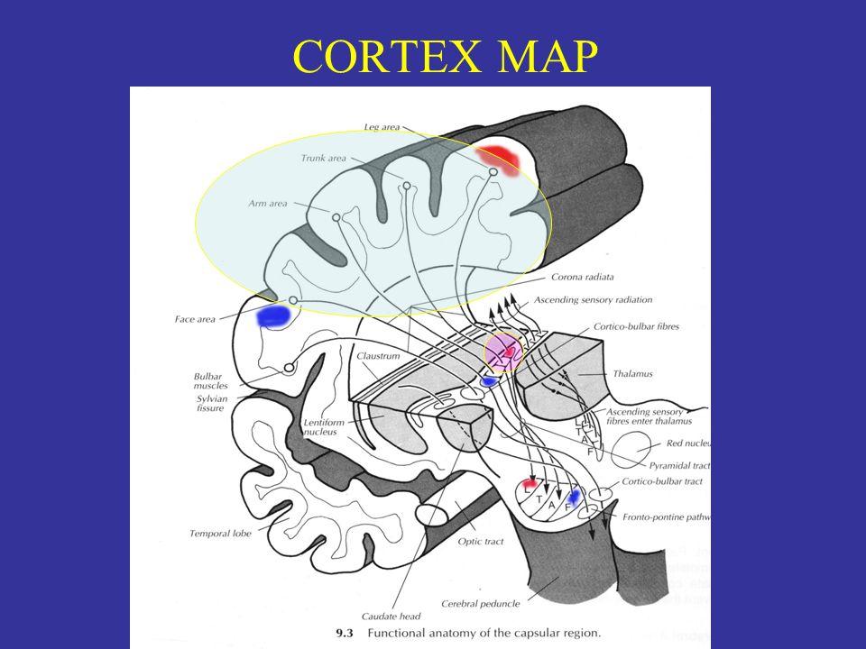 CORTEX MAP
