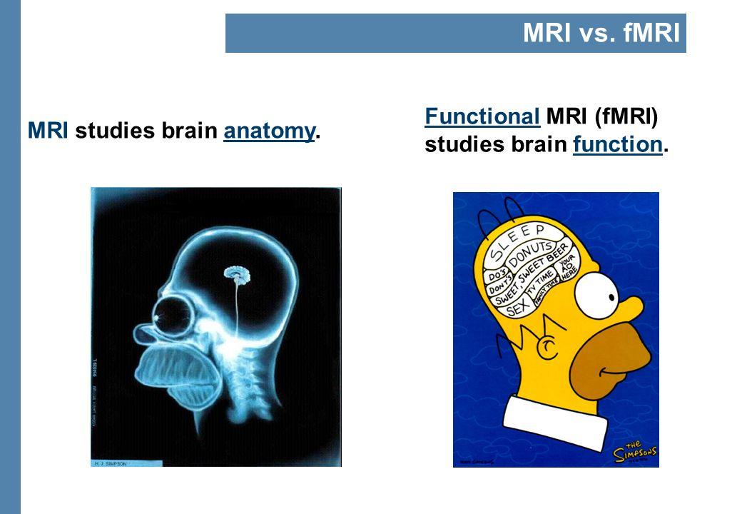 MRI studies brain anatomy. Functional MRI (fMRI) studies brain function. MRI vs. fMRI