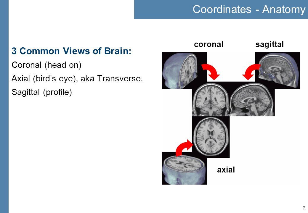 7 Coordinates - Anatomy 3 Common Views of Brain: Coronal (head on) Axial (birds eye), aka Transverse. Sagittal (profile) sagittalcoronal axial