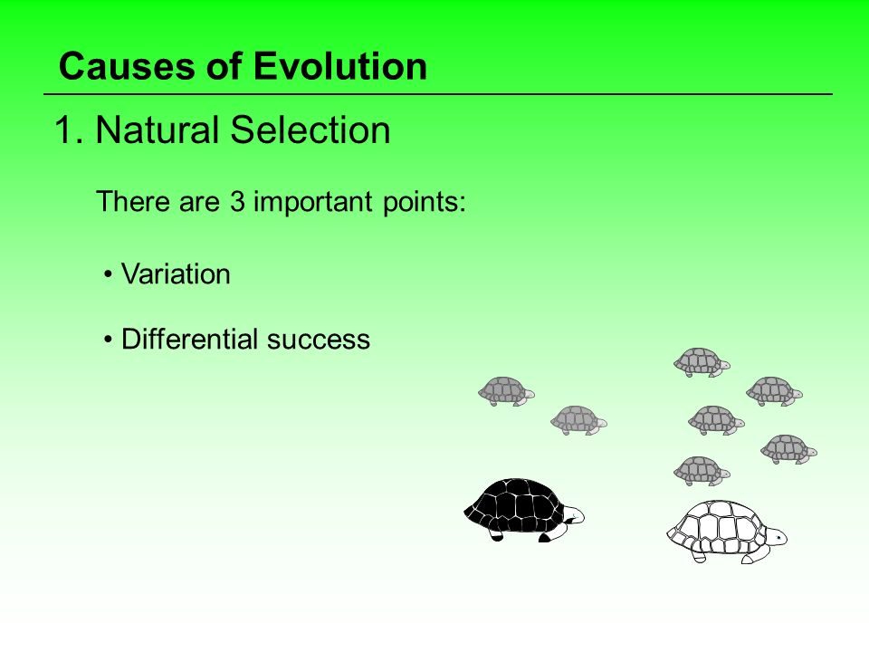 Causes of Evolution 1. Natural Selection There are 3 important points: Variation Differential success