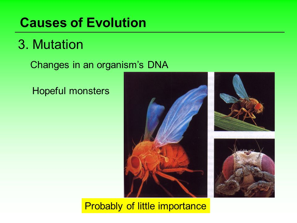 Causes of Evolution 3. Mutation Changes in an organisms DNA Hopeful monsters Probably of little importance