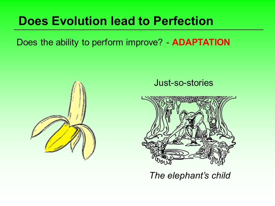 Does Evolution lead to Perfection Does the ability to perform improve? - ADAPTATION Just-so-stories The elephants child