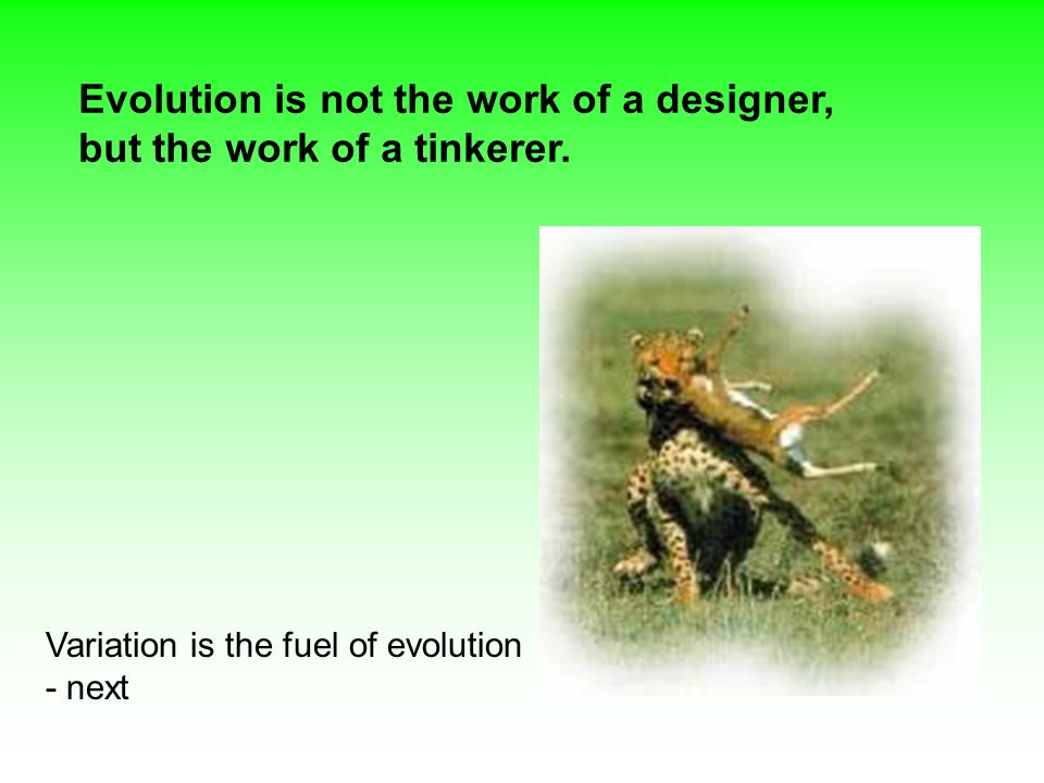 Variation is the fuel of evolution - next Evolution is not the work of a designer, but the work of a tinkerer.