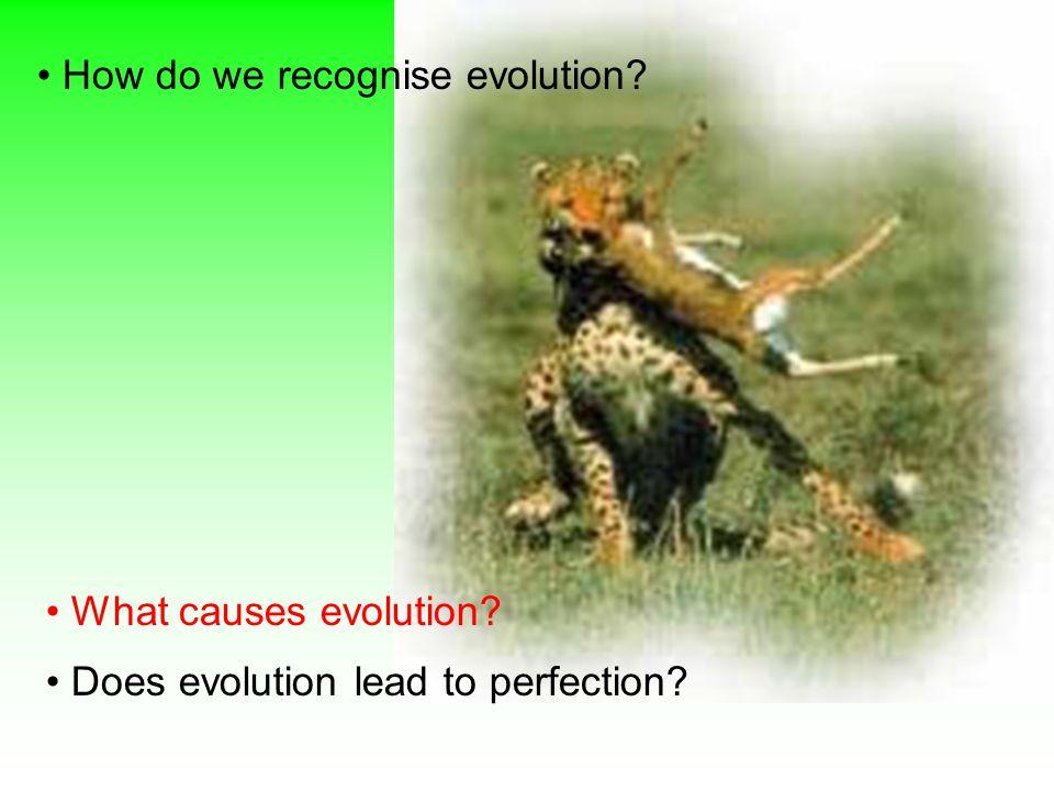 Causes of Evolution 3.