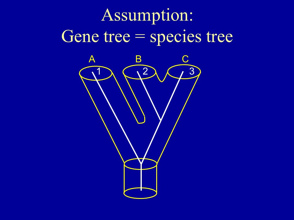Assumption: Gene tree = species tree ABC 123