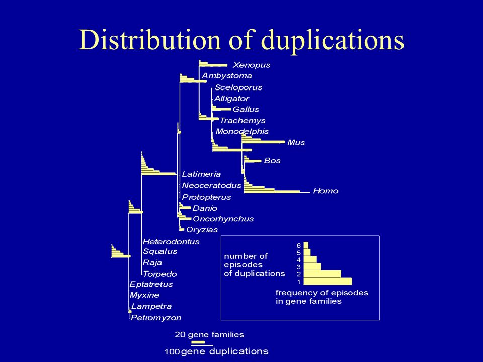 Distribution of duplications