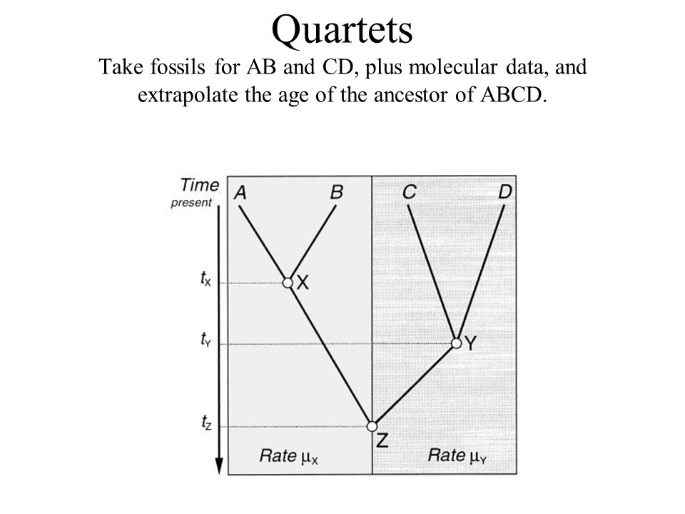 Quartets Take fossils for AB and CD, plus molecular data, and extrapolate the age of the ancestor of ABCD.