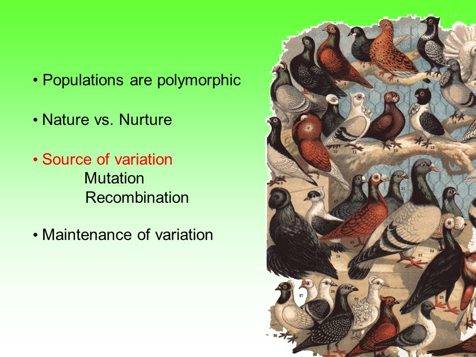 Source of Genetic Variation 1.