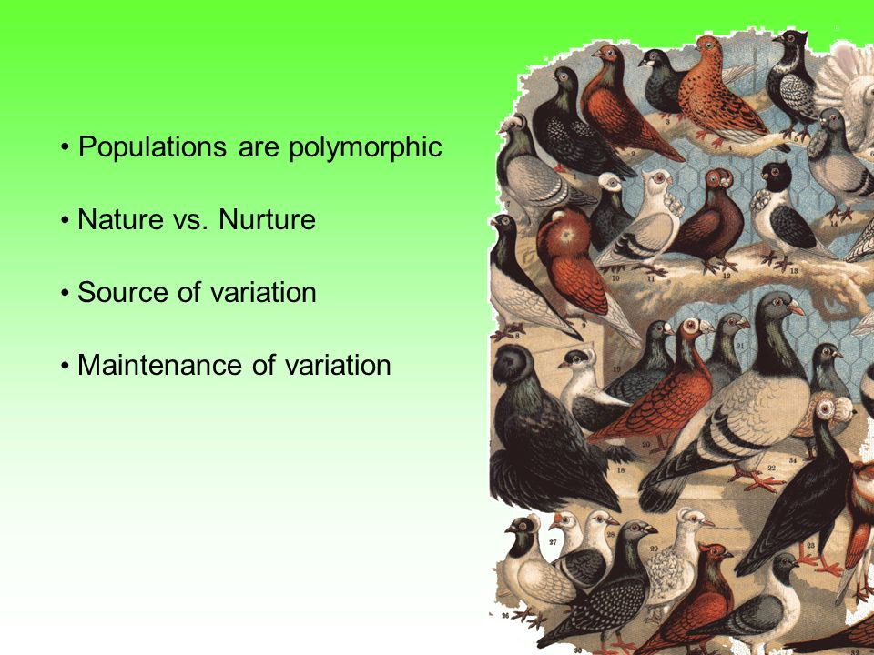 Populations are polymorphic Nature vs. Nurture Source of variation Maintenance of variation