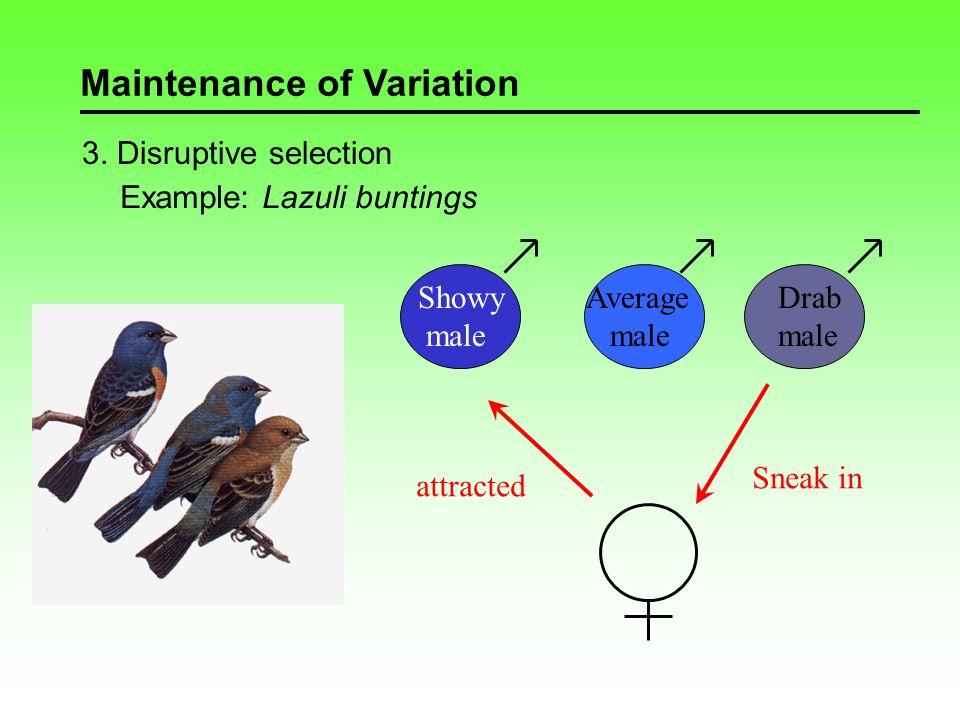 Maintenance of Variation 4.