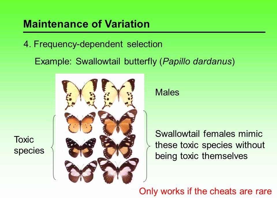 Maintenance of Variation 5.
