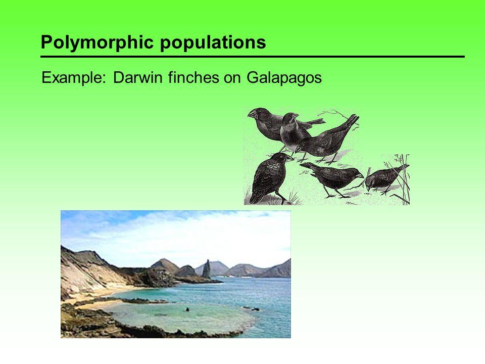Polymorphic populations Example: Lazuli bunting