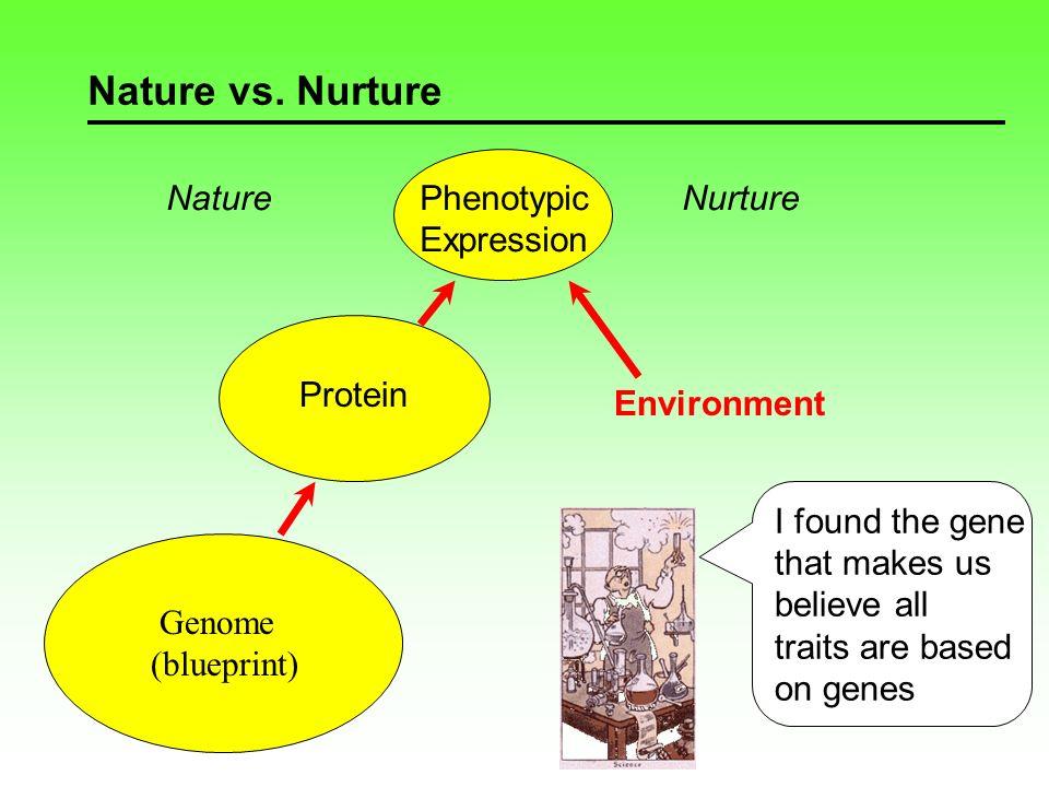 Nature vs. Nurture Gene Chromosome Genome Genepool