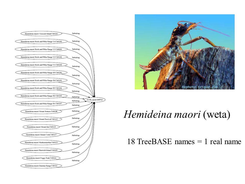 Hemideina maori (weta) 18 TreeBASE names = 1 real name