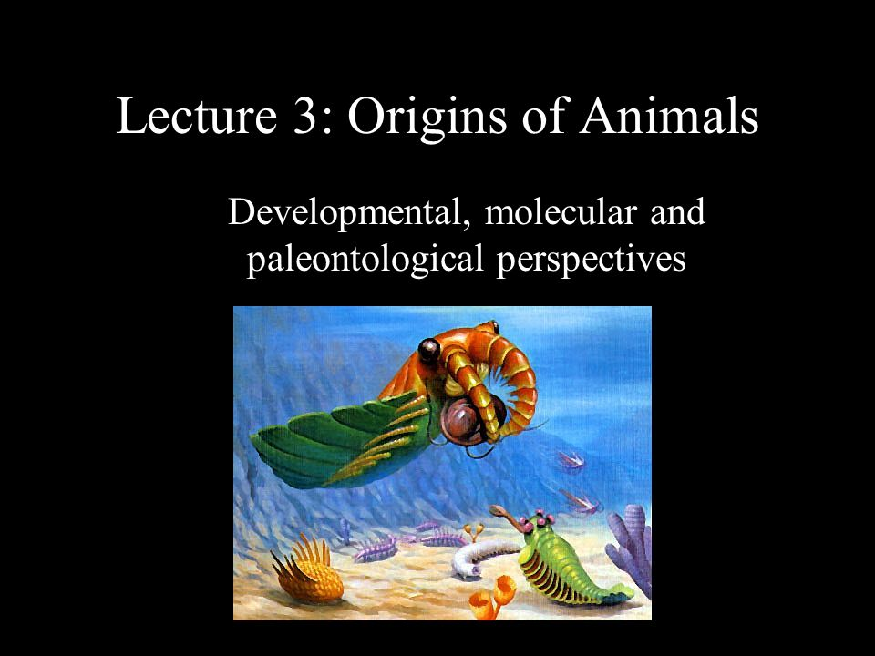 1 Lecture 3: Origins of Animals Developmental, molecular and paleontological perspectives