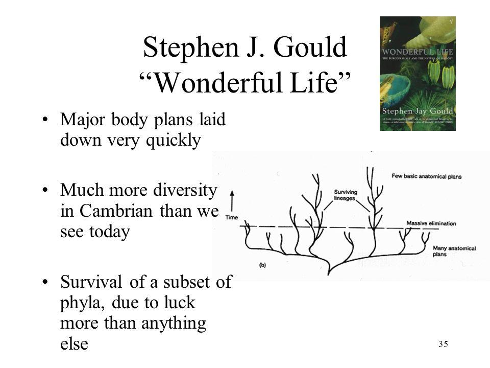 35 Stephen J.