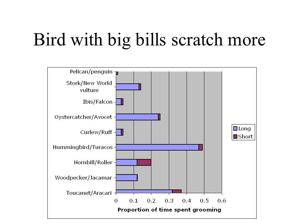 Bird with big bills scratch more