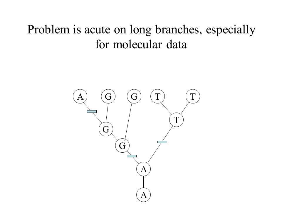 Problem is acute on long branches, especially for molecular data A T TT A G G GG A