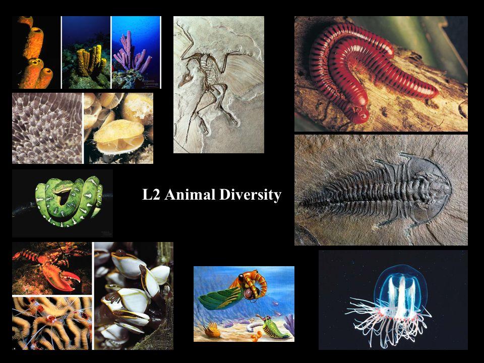 1 L2 Animal Diversity