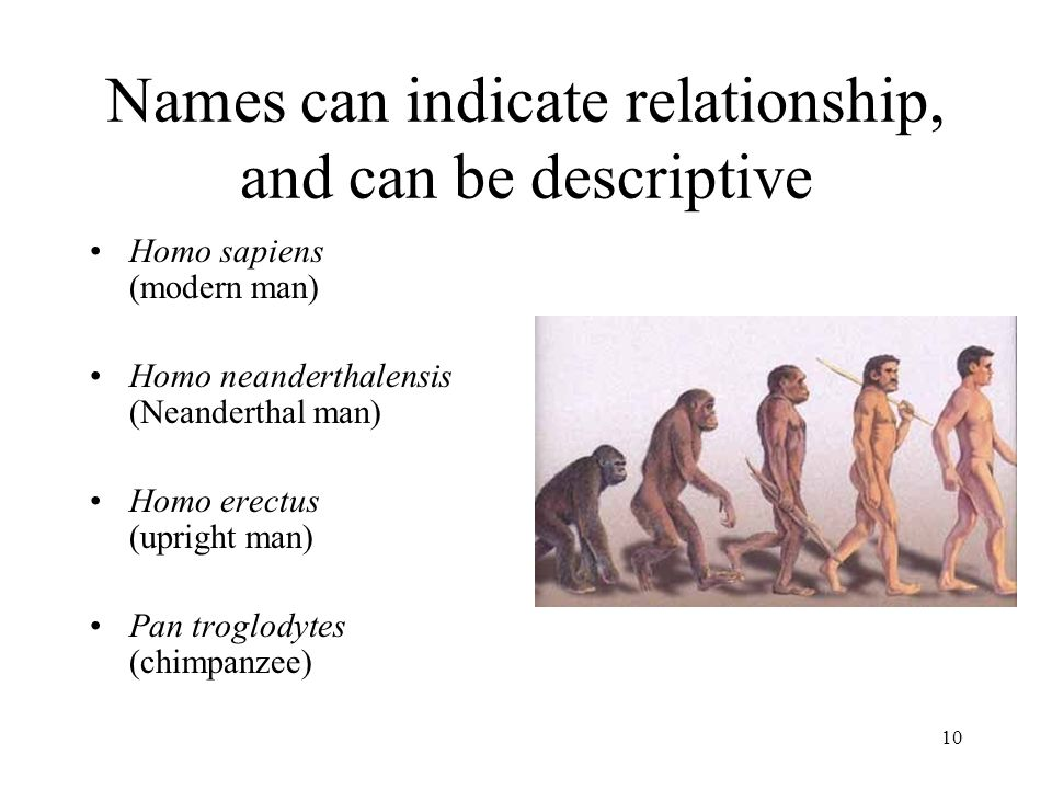 10 Names can indicate relationship, and can be descriptive Homo sapiens (modern man) Homo neanderthalensis (Neanderthal man) Homo erectus (upright man) Pan troglodytes (chimpanzee)