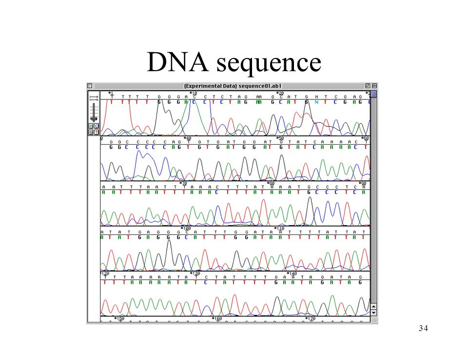34 DNA sequence