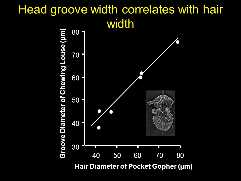 Head groove width correlates with hair width 4050607080 30 40 50 60 70 80 Groove Diameter of Chewing Louse (µm) Hair Diameter of Pocket Gopher (µm)