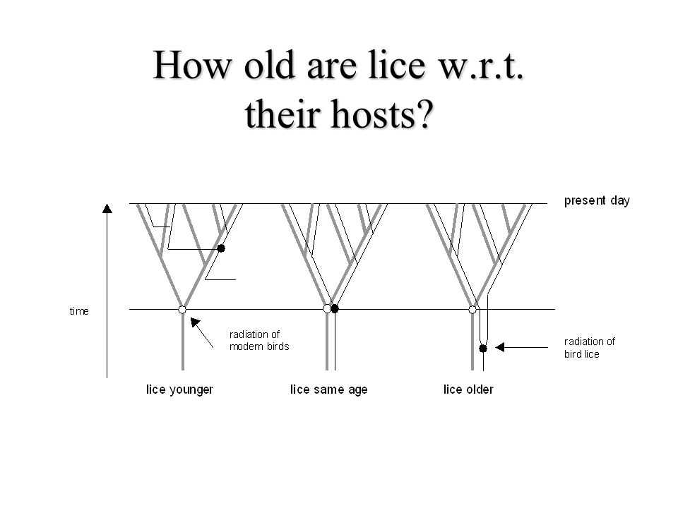 How old are lice w.r.t. their hosts