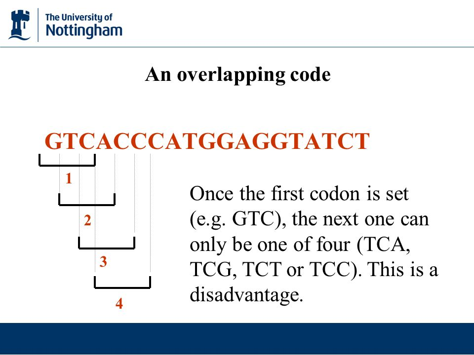 An overlapping code GTCACCCATGGAGGTATCT 1 2 3 4 Once the first codon is set (e.g. GTC), the next one can only be one of four (TCA, TCG, TCT or TCC). T