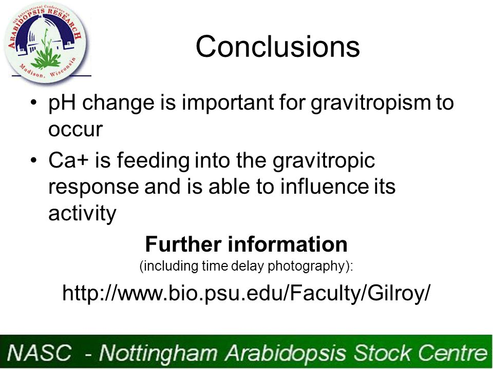 Conclusions pH change is important for gravitropism to occur Ca+ is feeding into the gravitropic response and is able to influence its activity Further information (including time delay photography): http://www.bio.psu.edu/Faculty/Gilroy/
