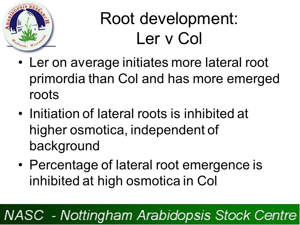 Root development: Ler v Col Ler on average initiates more lateral root primordia than Col and has more emerged roots Initiation of lateral roots is inhibited at higher osmotica, independent of background Percentage of lateral root emergence is inhibited at high osmotica in Col