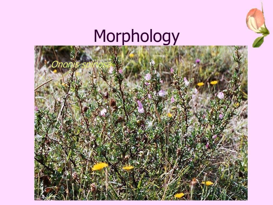 Geography Ononis repensOnonis spinosa Preston, CD, Pearman, DA and Dines, TD (2002) New Atlas of the British and Irish Flora