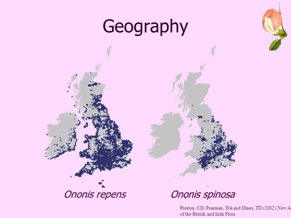 Geography Ononis repensOnonis spinosa Preston, CD, Pearman, DA and Dines, TD (2002) New Atlas of the British and Irish Flora