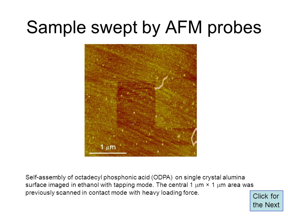 Sample swept by AFM probes Self-assembly of octadecyl phosphonic acid (ODPA) on single crystal alumina surface imaged in ethanol with tapping mode. Th