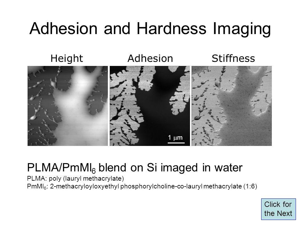 Adhesion and Hardness Imaging PLMA/PmMl 6 blend on Si imaged in water PLMA: poly (lauryl methacrylate) PmMl 6 : 2-methacryloyloxyethyl phosphorylcholi