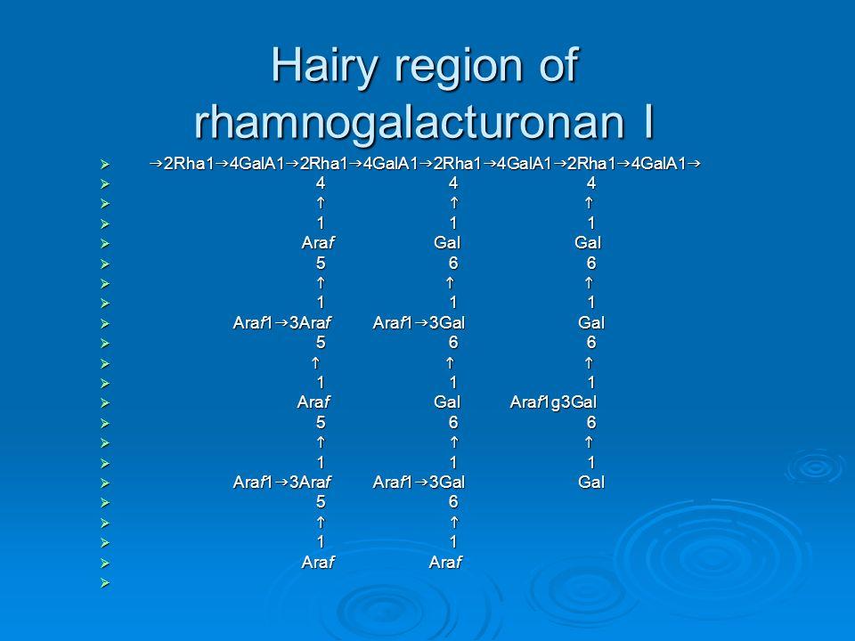Hairy region of rhamnogalacturonan I 2Rha1 4GalA1 2Rha1 4GalA1 2Rha1 4GalA1 2Rha1 4GalA1 2Rha1 4GalA1 2Rha1 4GalA1 2Rha1 4GalA1 2Rha1 4GalA1 4 4 4 4 4 4 1 1 1 1 1 1 Araf Gal Gal Araf Gal Gal 5 6 6 5 6 6 1 1 1 1 1 1 Araf1 3Araf Araf1 3Gal Gal Araf1 3Araf Araf1 3Gal Gal 5 6 6 5 6 6 1 1 1 1 1 1 Araf Gal Araf1g3Gal Araf Gal Araf1g3Gal 5 6 6 5 6 6 1 1 1 1 1 1 Araf1 3Araf Araf1 3Gal Gal Araf1 3Araf Araf1 3Gal Gal 5 6 5 6 1 1 1 1 Araf Araf Araf Araf