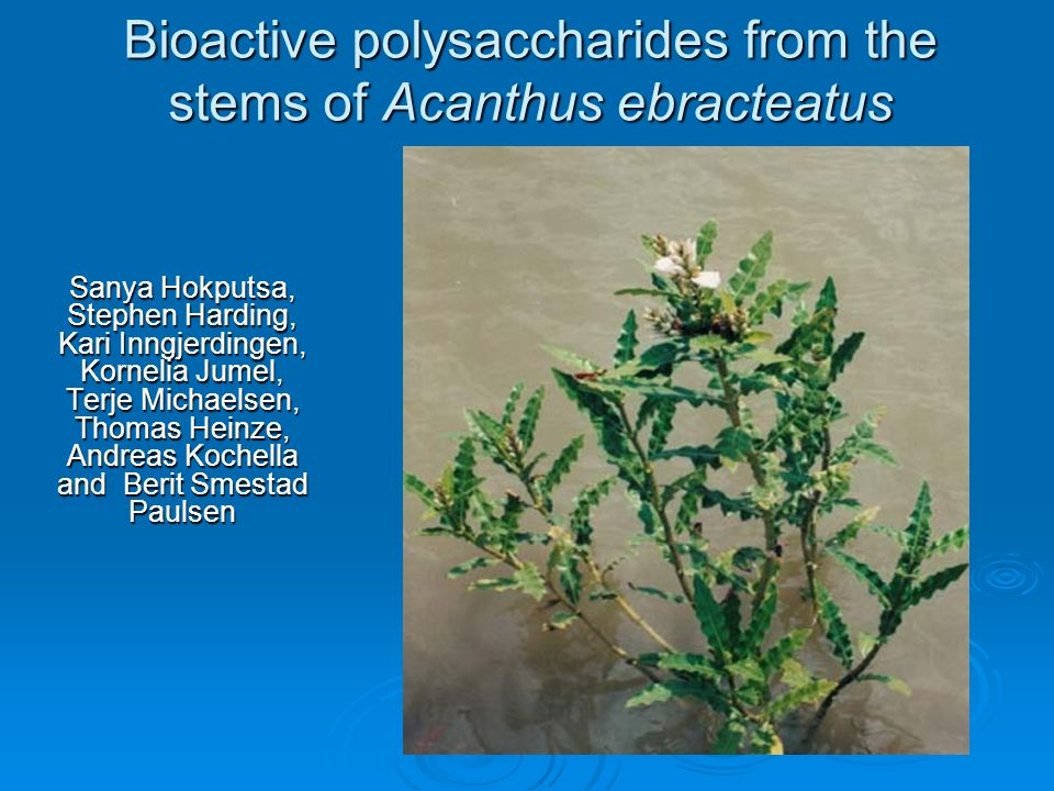 Bioactive polysaccharides from the stems of Acanthus ebracteatus Sanya Hokputsa, Stephen Harding, Kari Inngjerdingen, Kornelia Jumel, Terje Michaelsen