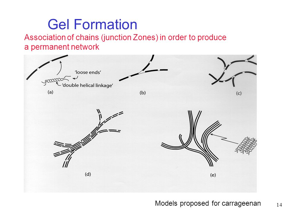 14 Gel Formation Association of chains (junction Zones) in order to produce a permanent network Diverse models for gel formation: Models proposed for