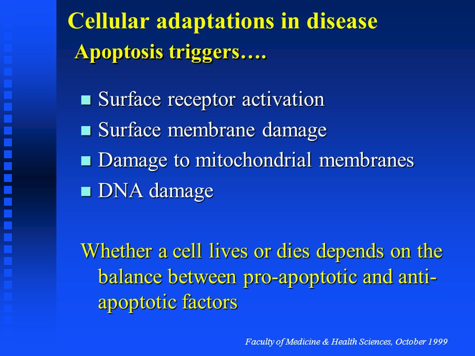 Faculty of Medicine & Health Sciences, October 1999 Cellular adaptations in disease Apoptosis biology Cell death pathways exist in the cell metabolism