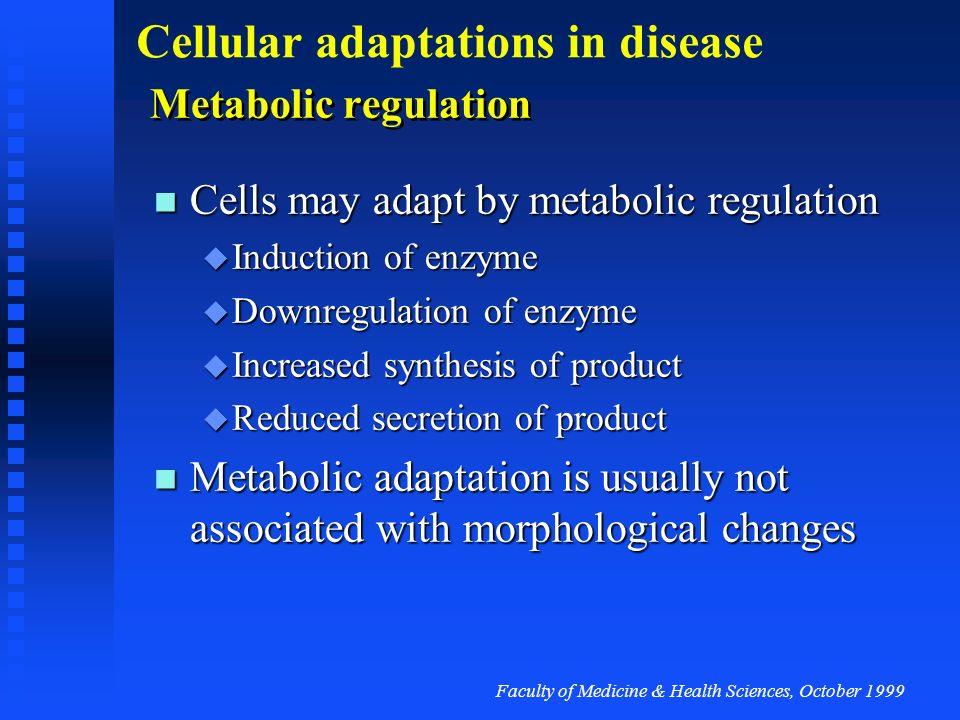 Faculty of Medicine & Health Sciences, October 1999 Cellular adaptations in disease Physiological hyperplasia Normal uterus Pregnant uterus