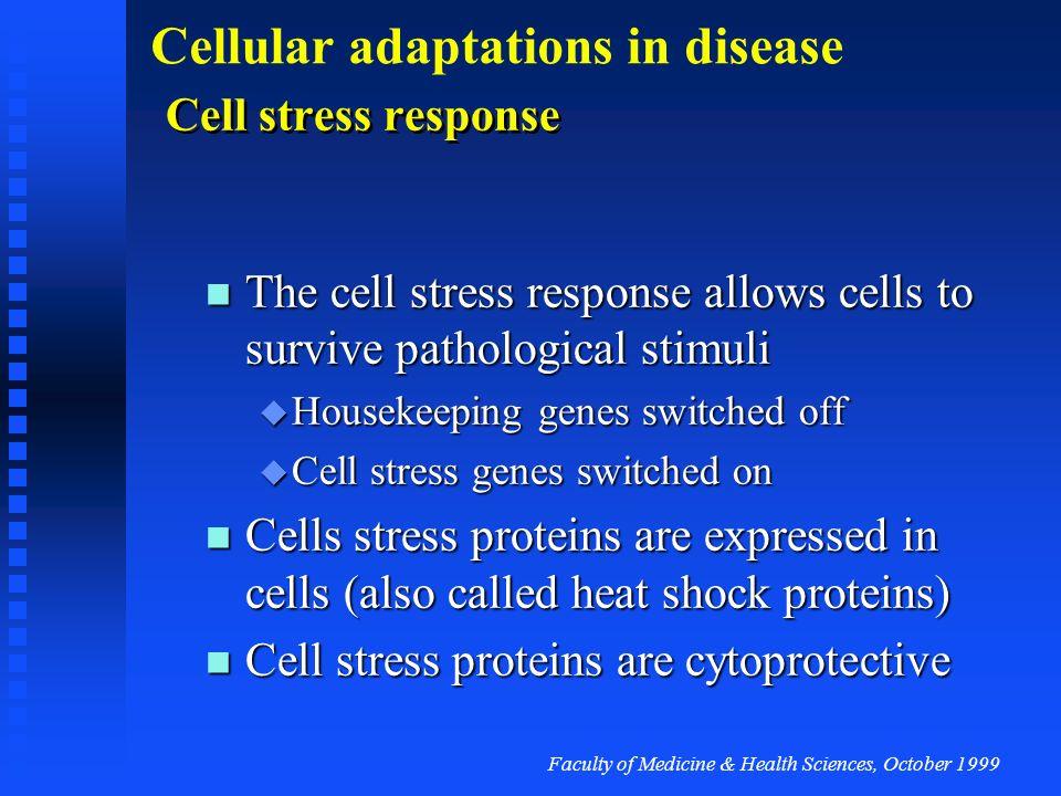 Faculty of Medicine & Health Sciences, October 1999 Cellular adaptations in disease