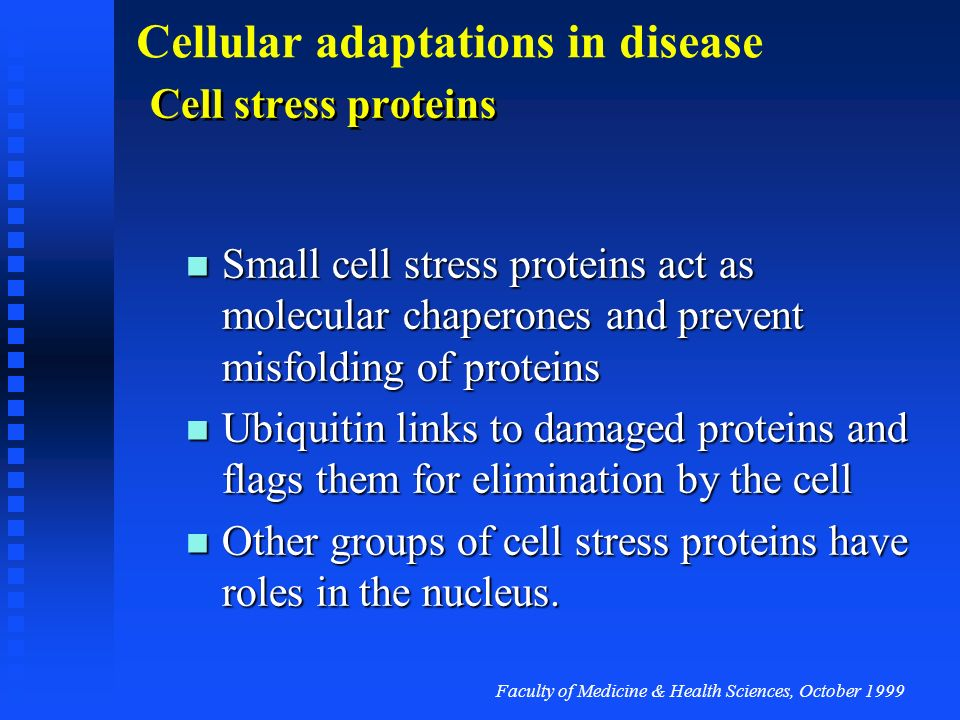 Faculty of Medicine & Health Sciences, October 1999 Cellular adaptations in disease Reduction in cell number is through programmed cell death Certain trophic signal to cells can lead to a specific form of cell death Certain trophic signal to cells can lead to a specific form of cell death Cell death is brought about by precise metabolic systems Cell death is brought about by precise metabolic systems The main type of programmed cell death is termed apoptosis The main type of programmed cell death is termed apoptosis