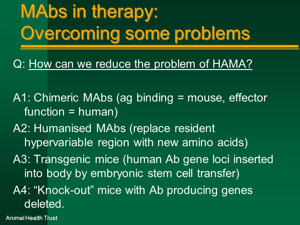 Animal Health Trust MAbs in therapy: Overcoming some problems Q: How can we reduce the problem of HAMA? A1: Chimeric MAbs (ag binding = mouse, effecto