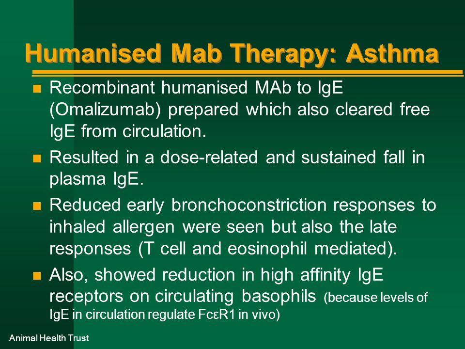Animal Health Trust Humanised Mab Therapy: Asthma n Recombinant humanised MAb to IgE (Omalizumab) prepared which also cleared free IgE from circulatio