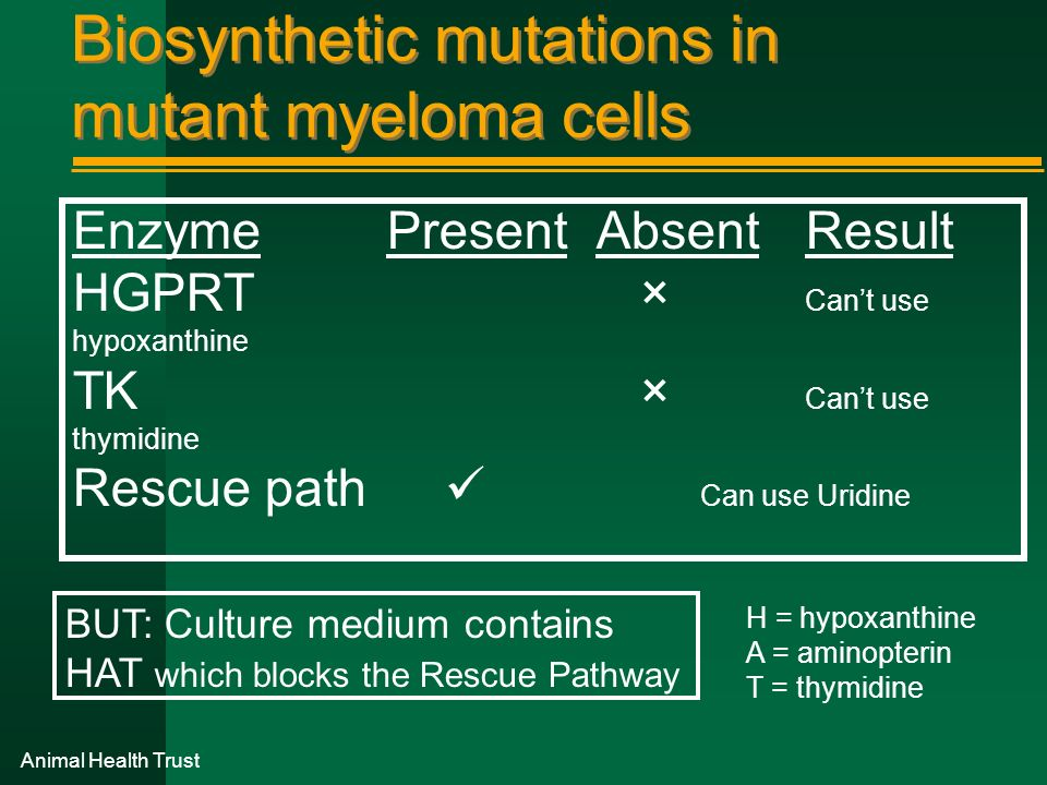 Animal Health Trust Biosynthetic mutations in mutant myeloma cells EnzymePresentAbsentResult HGPRT × Cant use hypoxanthine TK × Cant use thymidine Res