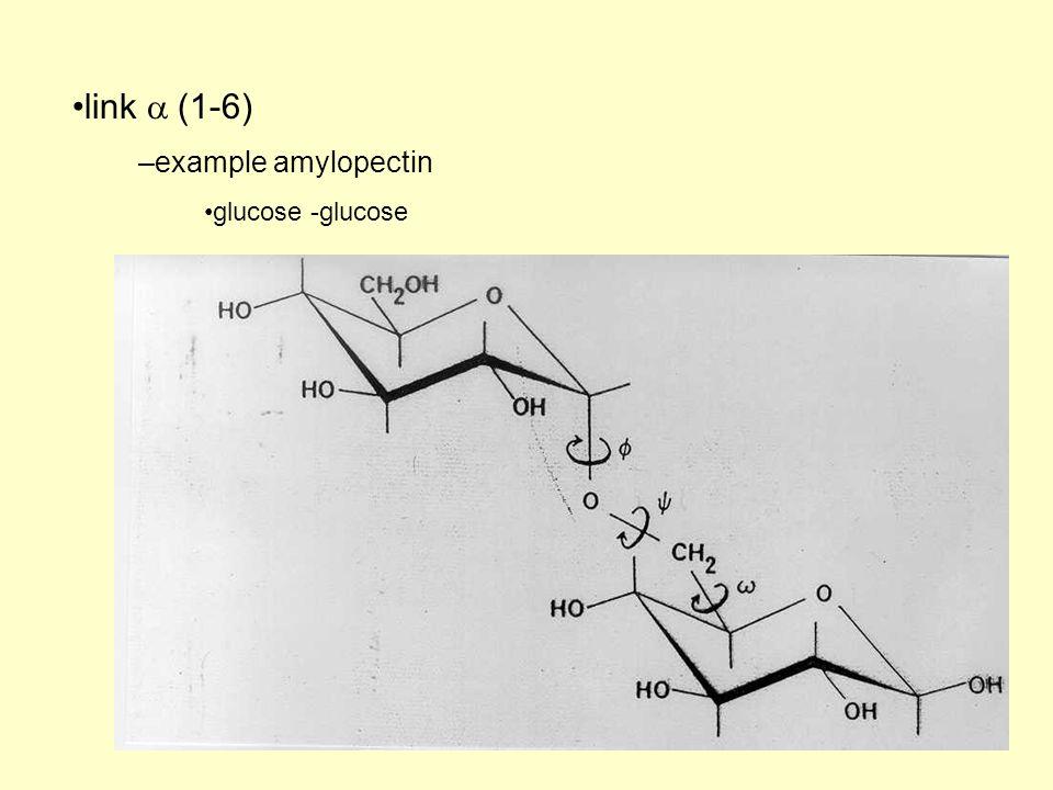 link (1-6) –example amylopectin glucose -glucose