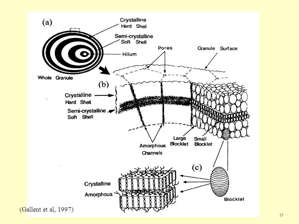 25 (Gallent et al, 1997)