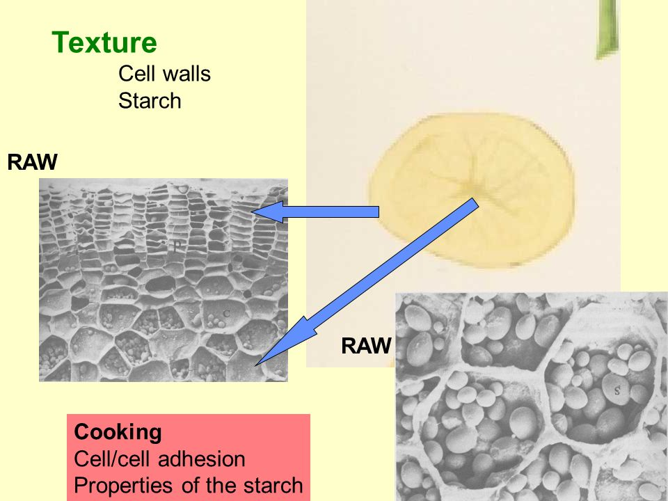 Texture Cell walls Starch Cooking Cell/cell adhesion Properties of the starch RAW