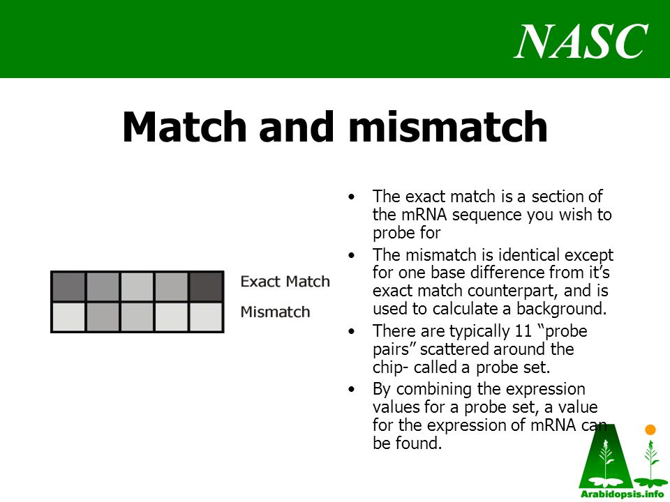 NASC Match and mismatch The exact match is a section of the mRNA sequence you wish to probe for The mismatch is identical except for one base difference from its exact match counterpart, and is used to calculate a background.