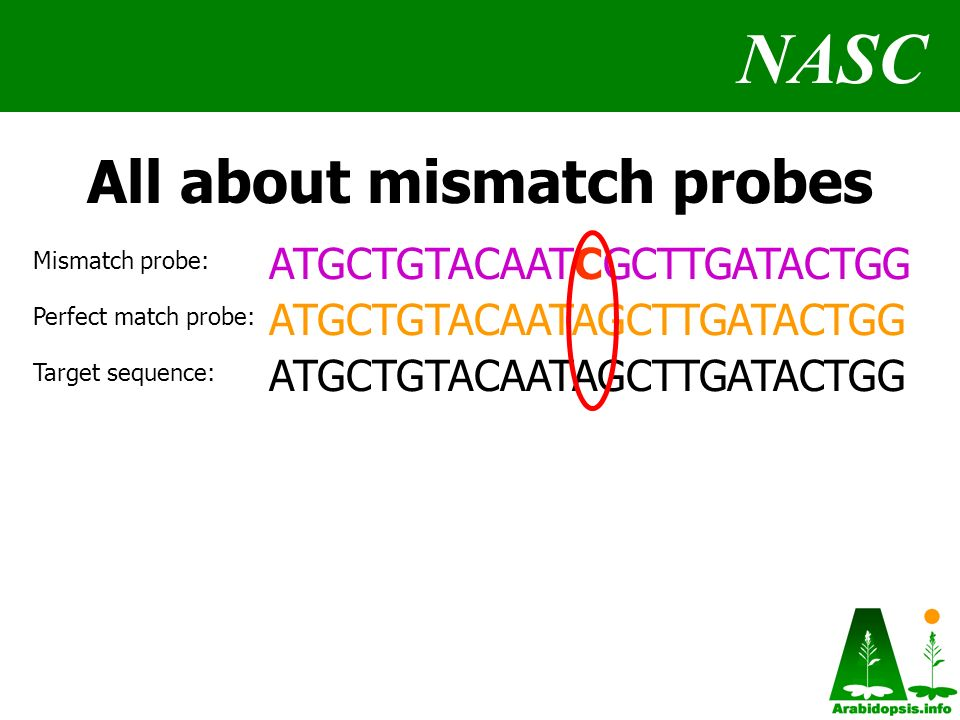 NASC All about mismatch probes ATGCTGTACAATCGCTTGATACTGG ATGCTGTACAATAGCTTGATACTGG Mismatch probe: Target sequence: Perfect match probe: